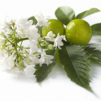 Fragrance Oil - White Patchouli (type)