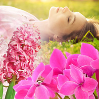 Fragrance Oil - Tranquil Sleep