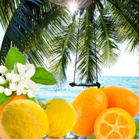 Fragrance Oil - Palm Island (clearance)