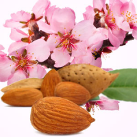 Fragrance Oil - Almond