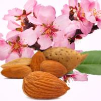 Fragrance Oil - Almond