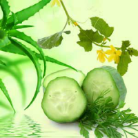 Fragrance Oil - Aloe Vera & Cucumber