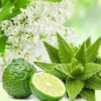 Fragrance Oil - Aloe & White Lilac