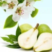 Fragrance Oil - Anjou Pear Blossoms (clearance)