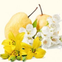 Fragrance Oil - Asian Pear & Lily (clearance)