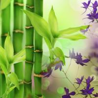 Fragrance Oil - Aussie Bamboo Grass