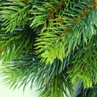 Fragrance Oil - Balsam Pine Tree