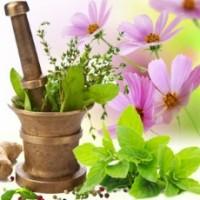Fragrance Oil - Basil Sage Mint