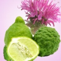 Fragrance Oil - Bergamot Coriander (type)