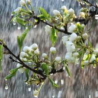 Fragrance Oil - China Rain