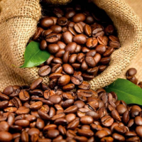 Fragrance Oil - Coffee Bean