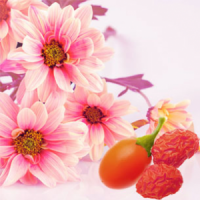 Fragrance Oil - Daisy & Goji Berry