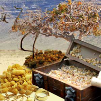 Fragrance Oil - Frankincense & Myrrh