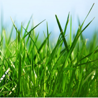 Fragrance Oil - Fresh Cut Grass