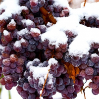 Fragrance Oil - Iced Wine (type)