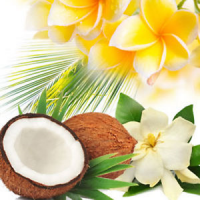 Fragrance Oil - Intoxicating Coconut