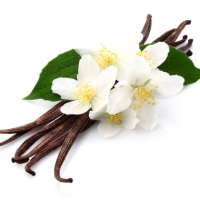 Fragrance Oil - Jasmine Vanilla (type)