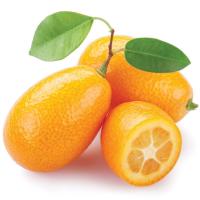 Fragrance Oil - Kumquat