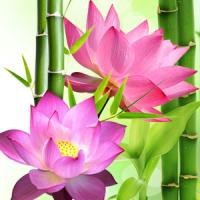 Fragrance Oil - Lotus Blossom