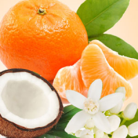 Fragrance Oil - Mandarin Coconut