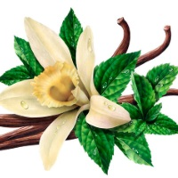 Fragrance Oil - Mint Vanilla