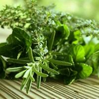 Fragrance Oil - Rosemary Mint (Aveda type)
