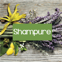 Fragrance Oil - Shampure (Aveda Type)