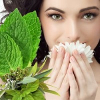 Fragrance Oil - Sinus Relief