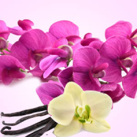 Fragrance Oil - Sweet Pea Vanilla (type)