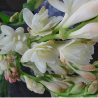 Fragrance Oil - Tuberose Angelica (JM type)  LIMITED EDITION