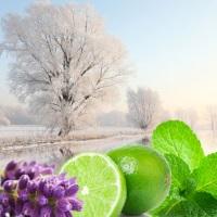 Fragrance Oil - Winter Garden (clearance)